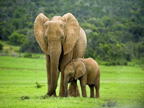 Nằm mơ thấy voi đánh xổ số con gì ăn chắc, có điềm báo gì