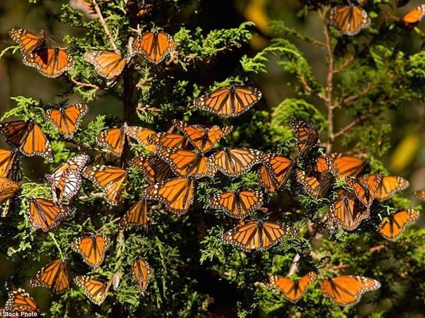 Mơ thấy bướm thử vận may với cặp số nào chắc ăn nhất?